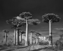 Surreal black-and-white glimpses of timelessness... | Tracking Transmedia | Scoop.it
