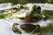 Les pesticides sont mortels pour les amphibiens | Autres Vérités | Scoop.it
