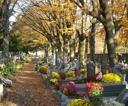 Sondage : Allez-vous au cimetière le jour des morts? | Sacrés Ancêtres, le mag | Scoop.it