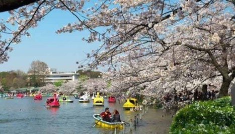 Japanese Cherry Blossom Ueno Park Tokyo Travel And Tour Destination | asia holidays destination picture | Beauty building, park, and city in asia | Scoop.it