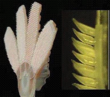 The 15 Coolest Cases of Biomimicry | Les matériaux intelligents & le Biomimétisme | Scoop.it