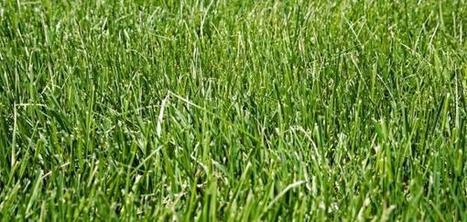 Sunlight helps scientists derive hydrogen from grass | Amazing Science | Scoop.it