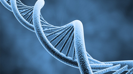 Gene therapy comes of age: We can now edit entire genomes to cure diseases | ExtremeTech | leapmind | Scoop.it