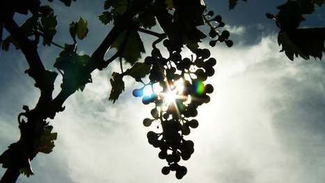 AZ Week: State Wine Industry Blooming   Arizona Public Media   CALS in the News   Scoop.it