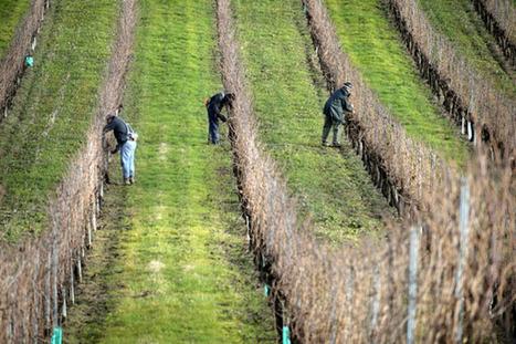 Viticulture : la nocivité des pesticides sur le cerveau démontrée   Infos Sciences Aquitaine   Wine, Life & Geek - entre Bordeaux & Toulouse   Scoop.it