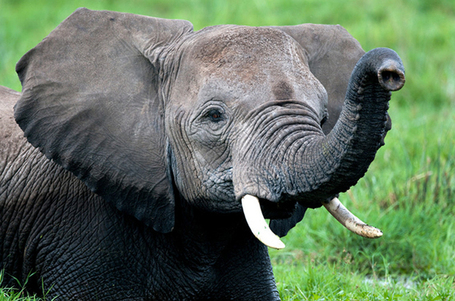 BREAKING: AWF Applauds Passage of a Kenyan Parliament Motion to Increase Penalties for Wildlife Crime | Kruger & African Wildlife | Scoop.it