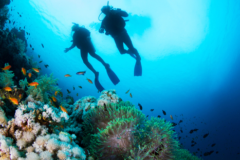 5 Things Scuba Diving Can Teach You About Life | All about water, the oceans, environmental issues | Scoop.it
