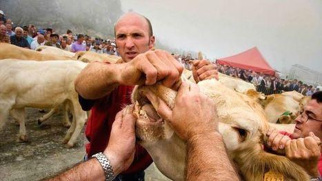 El tributo de las tres vacas: la curiosa vigencia del tratado internacional más antiguo de Europa - BBC Mundo | limes | Scoop.it