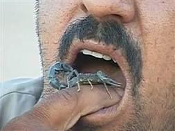 Iraqi farmer: I'm addicted to eating scorpions | Strange days indeed... | Scoop.it