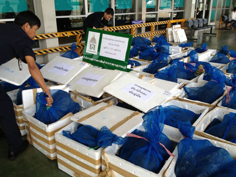 PHOTOS: Thai airport authorities seize hundreds of animals in two separateseizures   Wildlife Trafficking: Who Does it? Allows it?   Scoop.it