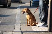 Droit des animaux: les chiennes aussi ont leur manifeste | ETHIQUE ANIMALE | Scoop.it
