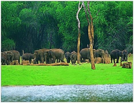 Thekkady, Hotels, Thekkady Resorts, Homestay in Thekkady, Wildlife Sanctuary, Hill Station | kerala Tourism Destinations | Scoop.it