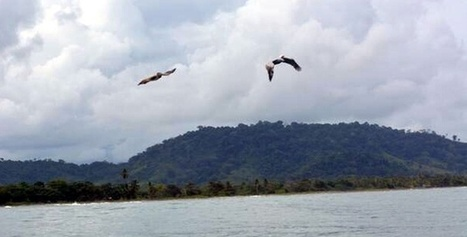 Colombia declara reserva natural para proteger tortugas en vía de ... - El Heraldo (Colombia)   Biodiversidad   Scoop.it