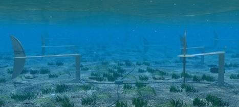 Biomimétisme: Le poisson inspire pour produire de l'énergie hydraulique ou BioStream | VivAfrik | Biomimétisme - Biomimicry | Scoop.it