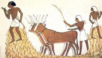 Los gobernadores del Antiguo Egipto estaban malnutridos y morían pronto.   Aux origines   Scoop.it