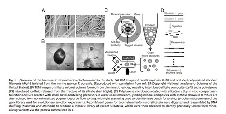 Biomimetics: Synthetic cells used to bioengineer new forms of silica   Amazing Science   Scoop.it