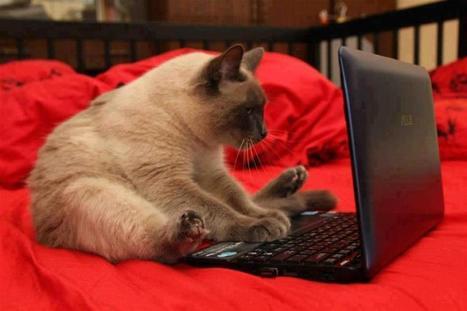 Patalynės pirkimo internetu privalumai | Patalynės pasaulis | Scoop.it