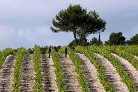 Temoignages et explications sur l'intérêt de la RSE et l'ISO 26000 dans la viticulture | Le Vin et + encore | Scoop.it