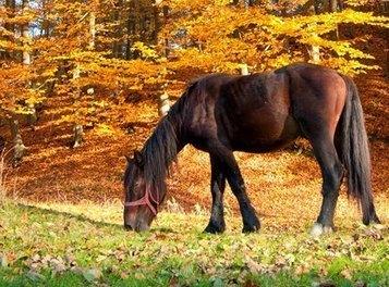 Fall Feeding Tips for Horses - TheHorse.com | FLP Horse Health | Scoop.it