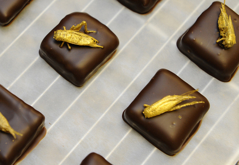 2014's Most Annoying Food Trends - Esquire   Entomophagy: Edible Insects and the Future of Food   Scoop.it