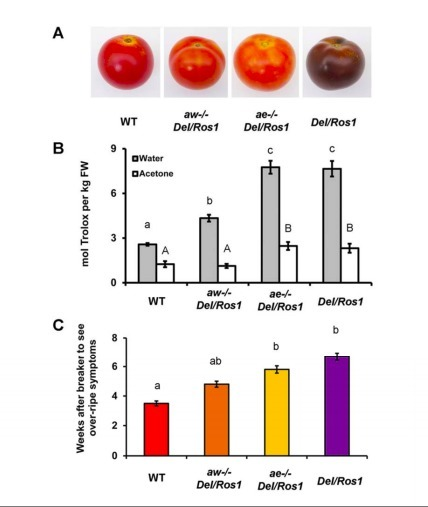 Different ROS-Scavenging Properties of Flavonoids Determine Their Abilities to Extend Shelf Life of Tomato | Emerging Research in Plant Cell Biology | Scoop.it