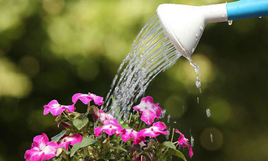 Don't let the heat get to your garden | Gardening is more than Digging the Dirt | Scoop.it