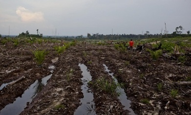 Greenpeace report on P&G's palm oil sources could spur industry change   BUSS4   Scoop.it
