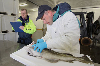NORWAY: Revolutionizing a 1000-year-old tradition | Aquaculture and Fisheries World Briefing | Scoop.it
