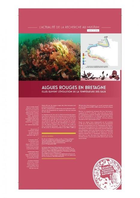 Algues rouges en Bretagne : elles suivent l'évolution de la température des eaux   UMR BOREA   Algues en Bretagne   Scoop.it