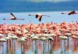 Lake Manyara Tanzania, Lake Manyara National Park, Gyan Expedition | Gyantz.com: Camping Safaris Tanzania | Scoop.it