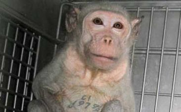 Is Animal Testing Ever Okay? | ethics in animal experiments | Scoop.it