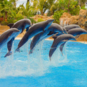 India Banned Dolphin Captivity on Moral Grounds - Motherboard (blog) | Cetacean Studies | Scoop.it