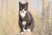 Bunny's Blog: Boardwalk Cats Return to Colonies Following Hurricane Sandy | Pet News | Scoop.it