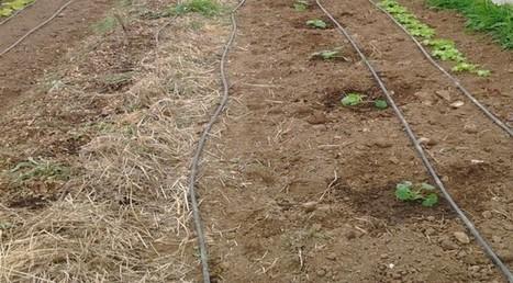 Comment déterminer simplement la nature du sol ? | Conseils Jardinage Bio | Education environnement | Scoop.it