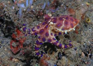 Five Great Tec Diving Destinations • Scuba Diver Life | Utila | Scoop.it