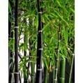 Leylandii hedge | Laurel hedge | Scoop.it
