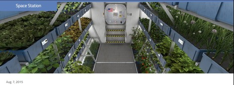 Crew Members Sample Leafy Greens Grown on Space Station | 21st Century Innovative Technologies and Developments as also discoveries, curiosity ( insolite)... | Scoop.it