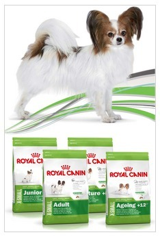 Royal Canin Develops New Brand for Pint-Sized Pooches | Corporate Identity | Scoop.it