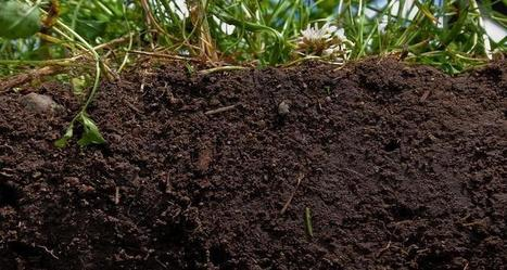 "700 year-old fertile soil technique could mitigate CC & revolutionize farming (""basic composting"") 