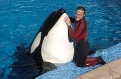 End animal captivity. | Animals in Captivity | Scoop.it