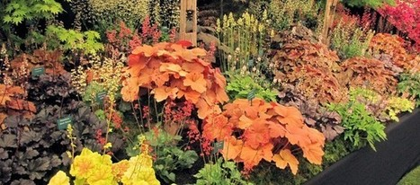 Coral Bells are Hot! | Gardening Life | Scoop.it