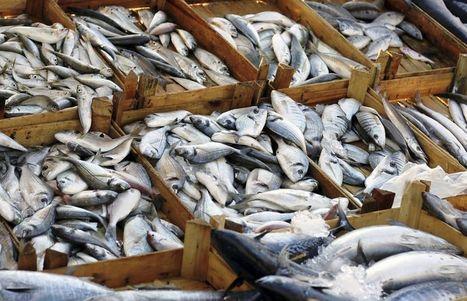 La moitié des poissons pêchés en pure perte | Toxicologie clinique et analytique | Scoop.it