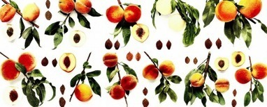 Peachy photos online | Agricultural Biodiversity | Scoop.it