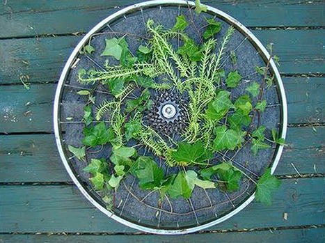 How to Turn a Bicycle Wheel Into a Rotating Vertical Garden | Urban Gardens | Unlimited Thinking For Limited Spaces | Urban Gardens | Vertical Farm - Food Factory | Scoop.it
