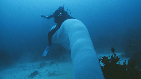 Giant glowing worms (pyrosomes) lights up the #ocean #nature | Limitless learning Universe | Scoop.it