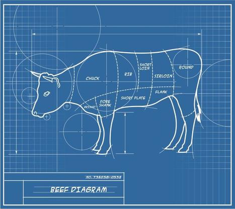 12 Surprising Ways to Use the Cow, Without Eating a Bite | Sustain Our Earth | Scoop.it