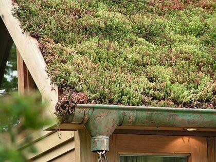 Les toitures végétalisées prennent racine | Biodiversité et sciences participatives | Scoop.it
