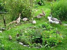 Permaculture - Ekopedia | sustainable development | Scoop.it