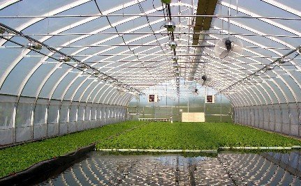 Is Fish Poop The Key to Global Food Security? - Care2.com (blog) | Aquaponics World View | Scoop.it