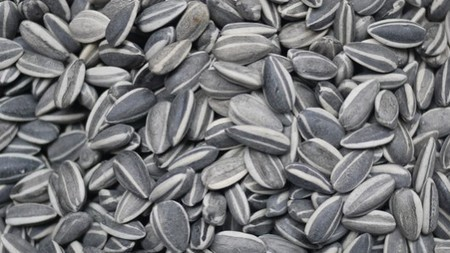 Sunflower seed husks provide concrete alternative | Five Regions of the Future | Scoop.it